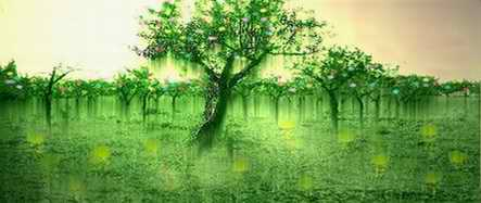 El Árbol de los Caramelos